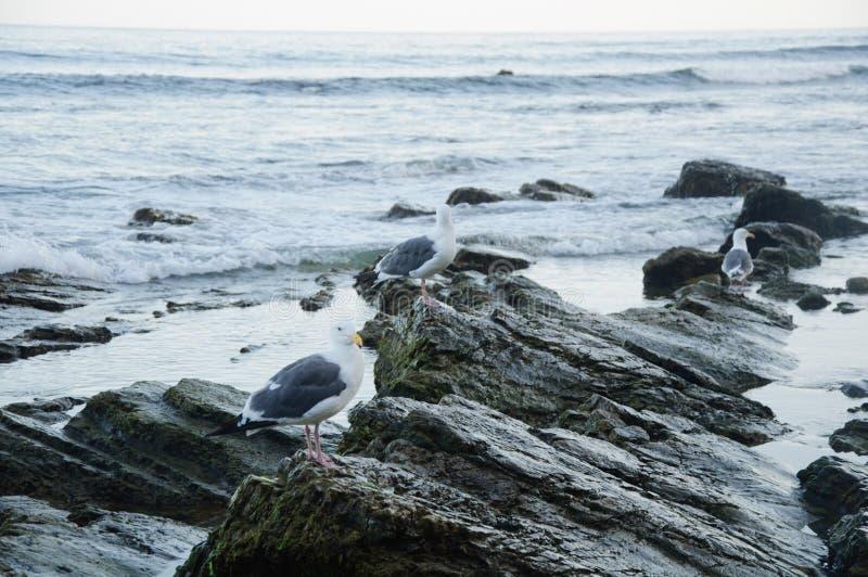 Opinión de la playa de Zuma de Duma Point, Malibu fotografía de archivo