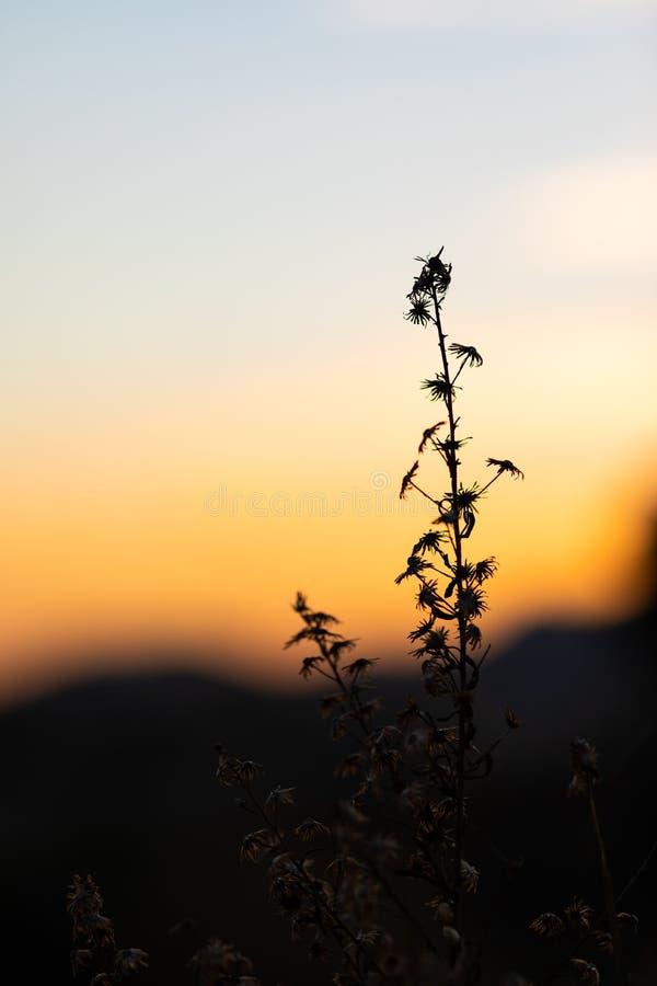 Opinión de la puesta del sol con las siluetas de hierbas y de plantas fotografía de archivo