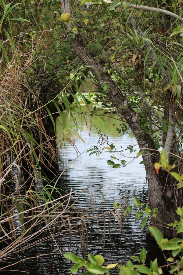 Opinión de la vegetación de los marismas fotos de archivo libres de regalías