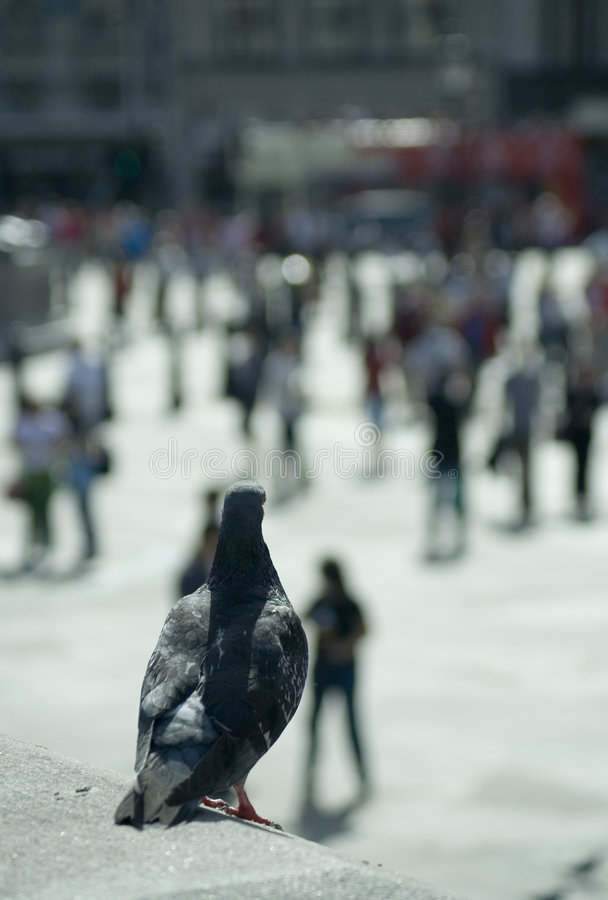 Opinión de ojo de pájaro imagen de archivo