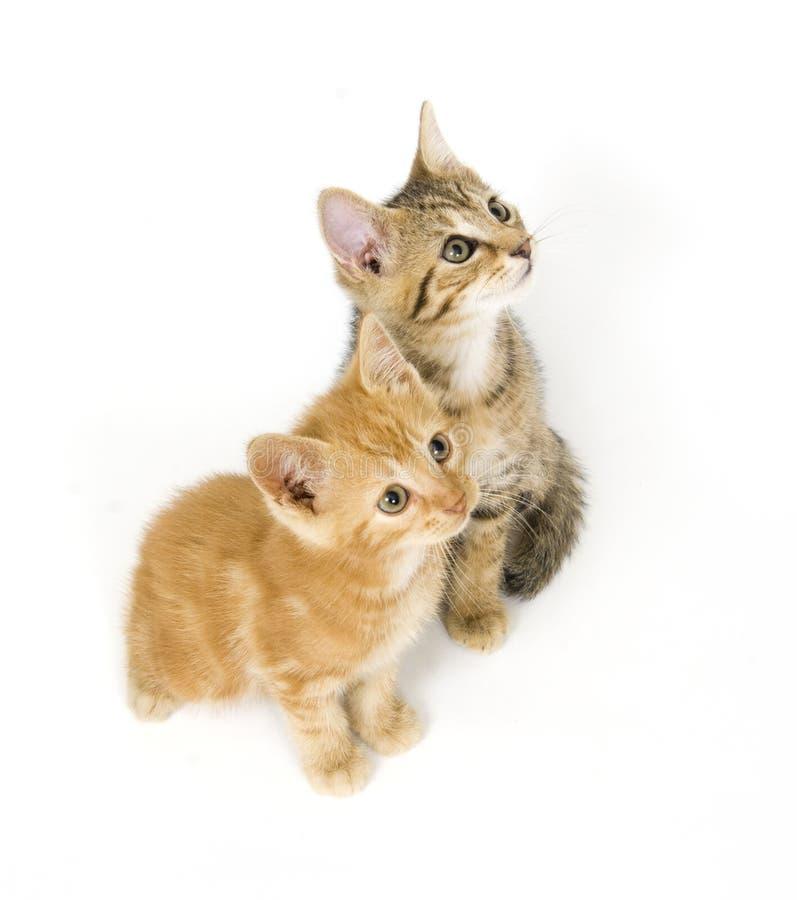 Opinión de ojo de pájaro gatitos fotografía de archivo
