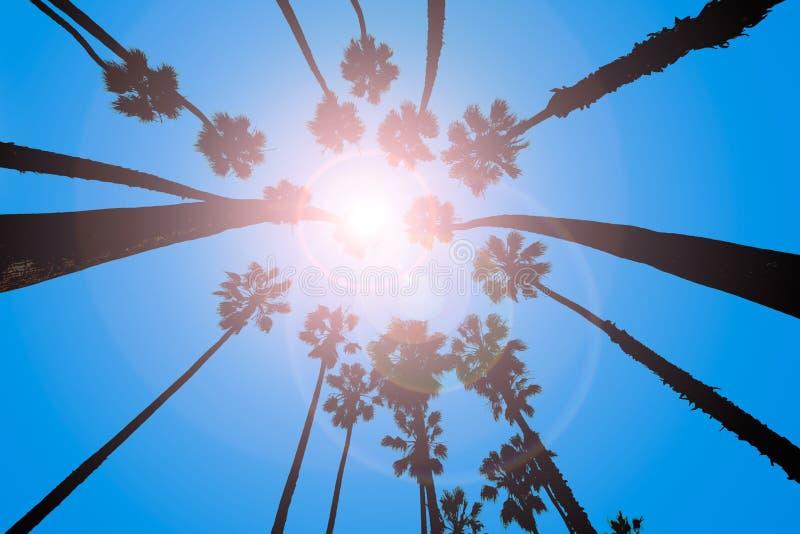Opinión de palmeras de California de debajo en Santa Barbara imagen de archivo libre de regalías