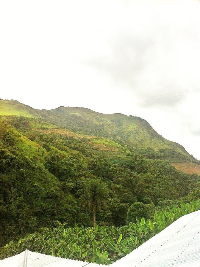 Opinión de plantación de plátano de Orocovis, Puerto Rico imagen de archivo