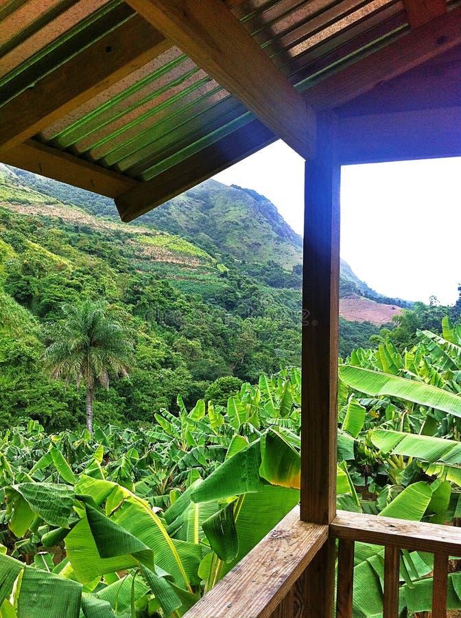 Opinión de plantación de plátano de Orocovis, Puerto Rico fotos de archivo libres de regalías