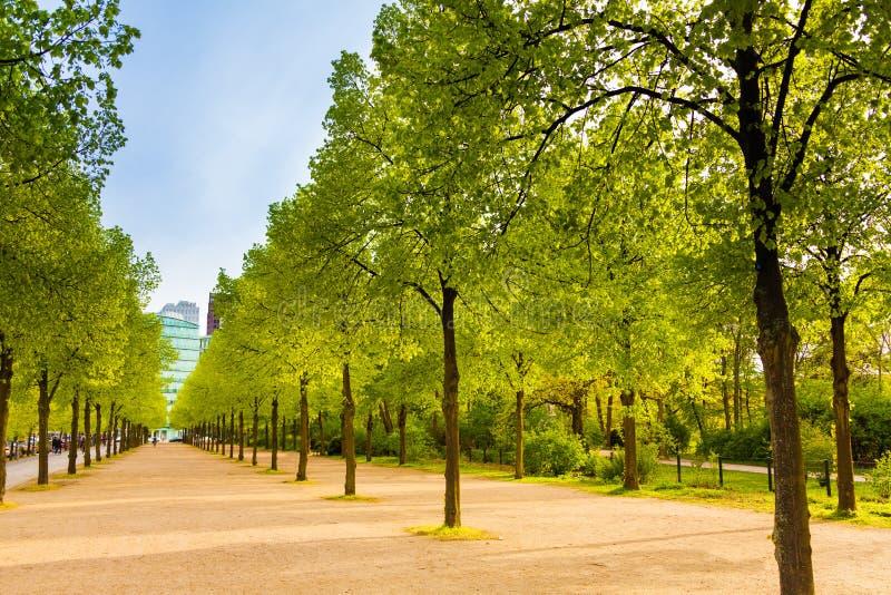 Opinión de Tiergarten con filas de árboles en Berlín foto de archivo libre de regalías