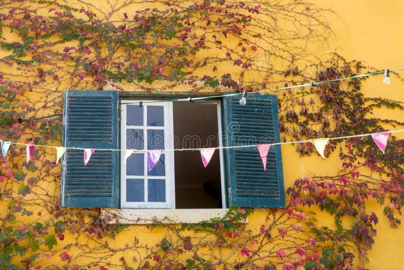 Opinión de Vindow con la pared amarilla y las plantas que suben fotos de archivo libres de regalías