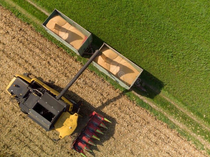 Opinión del abejón del cargamento de la máquina segador del maíz en los remolques foto de archivo