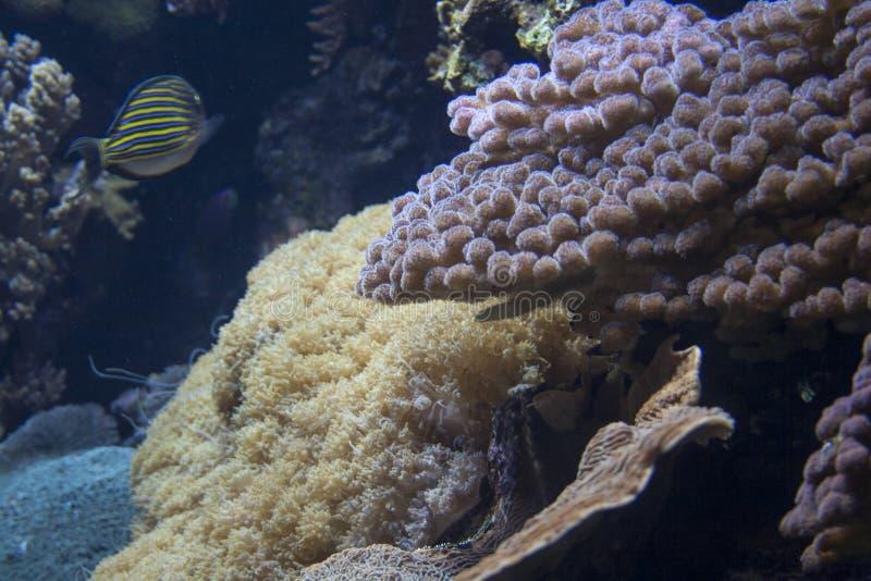 Opinión del acuario de Coral Reef imagenes de archivo