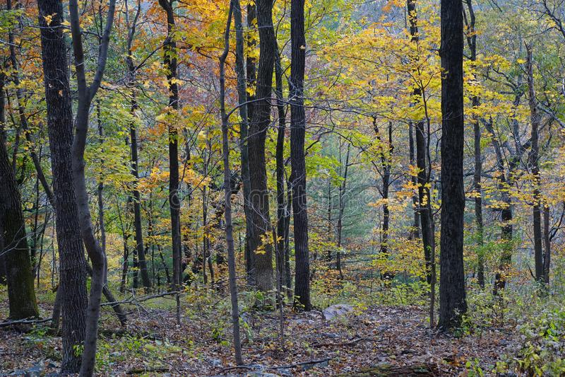 Opinión del bosque del otoño con follaje amarillo colorido imagen de archivo