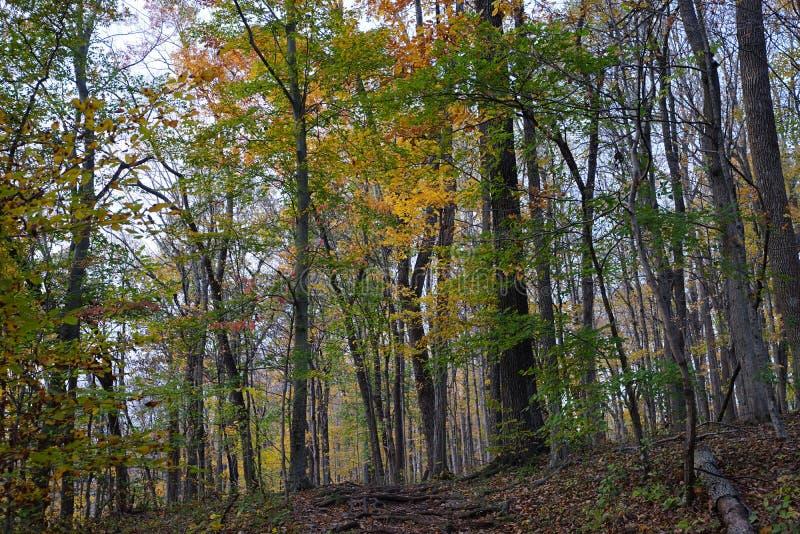 Opinión del bosque del otoño con follaje amarillo colorido foto de archivo