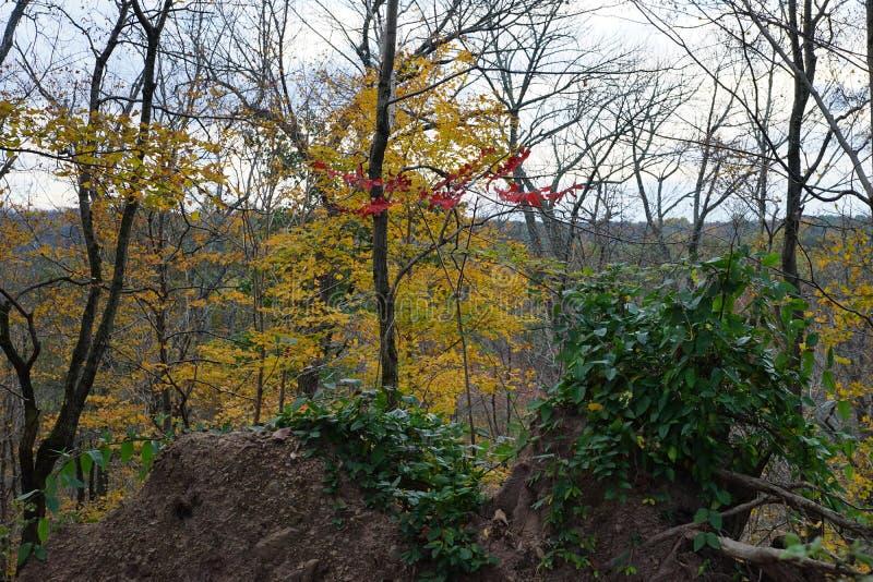Opinión del bosque del otoño con la elevación desigual, las rocas y los árboles con las hojas amarillas foto de archivo