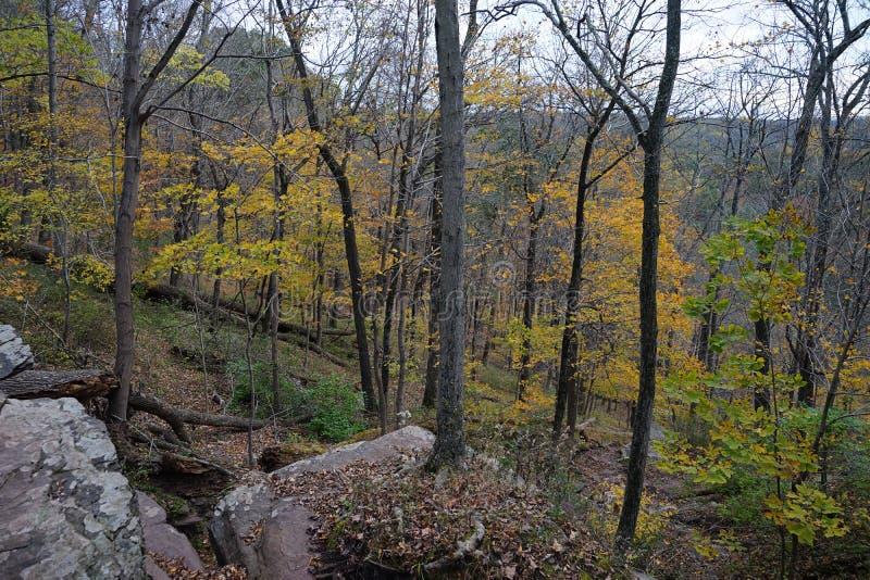 Opinión del bosque del otoño con la elevación desigual y árboles con las hojas amarillas fotografía de archivo