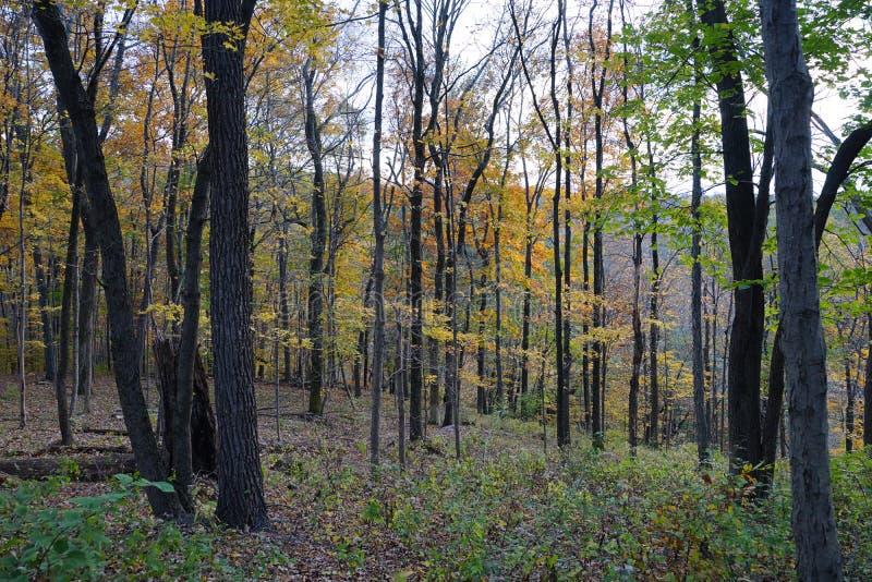 Opinión del bosque del otoño con las rocas y el follaje amarillo foto de archivo libre de regalías