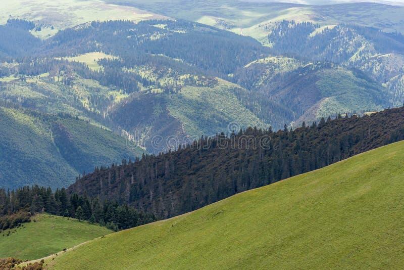 Opinión del bosque y del prado del top de la montaña fotografía de archivo
