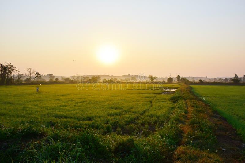 Opinión del campo del arroz de la mañana, Chiang Rai fotografía de archivo libre de regalías