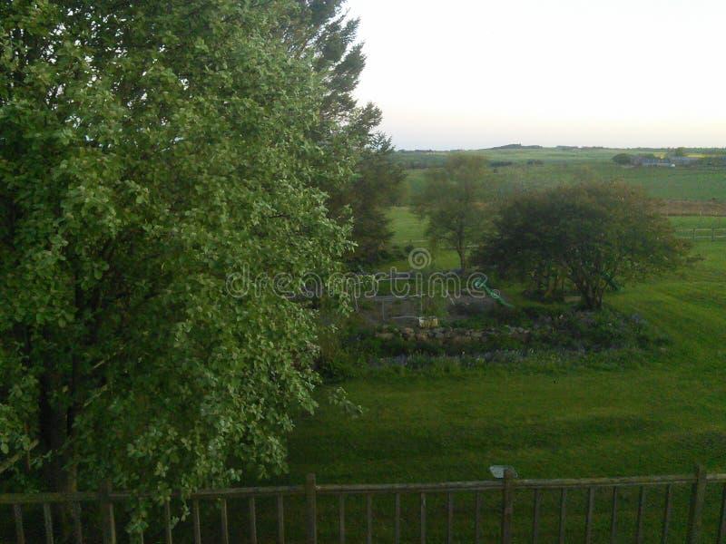 Opinión del campo con los árboles por la tarde escocia imagen de archivo libre de regalías
