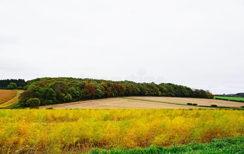 Opinión del campo de Norfolk fotografía de archivo libre de regalías