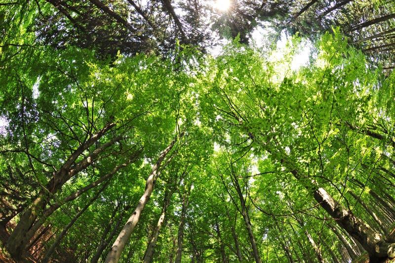 Opinión del fisheye de los árboles forestales de la naturaleza foto de archivo