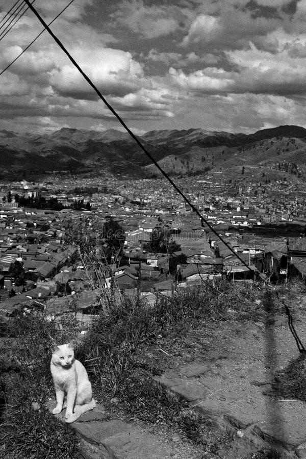 Opinión del gato y de la ciudad imagenes de archivo