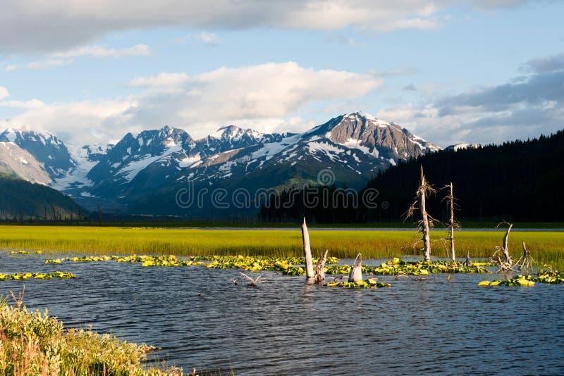 Opinión del glaciar del sonido de príncipe Guillermo de Alaska fotos de archivo