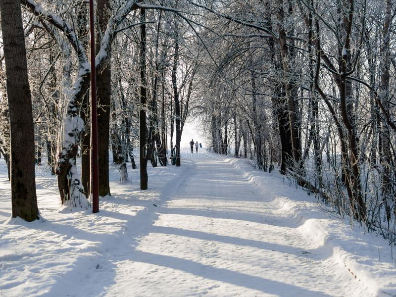 Opinión del invierno del callejón en el parque en ciudad grande imagen de archivo