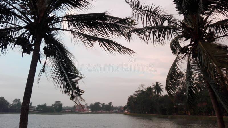 Opinión del lago, árboles de coco, opinión de la ciudad, agua, ventosa fotos de archivo libres de regalías