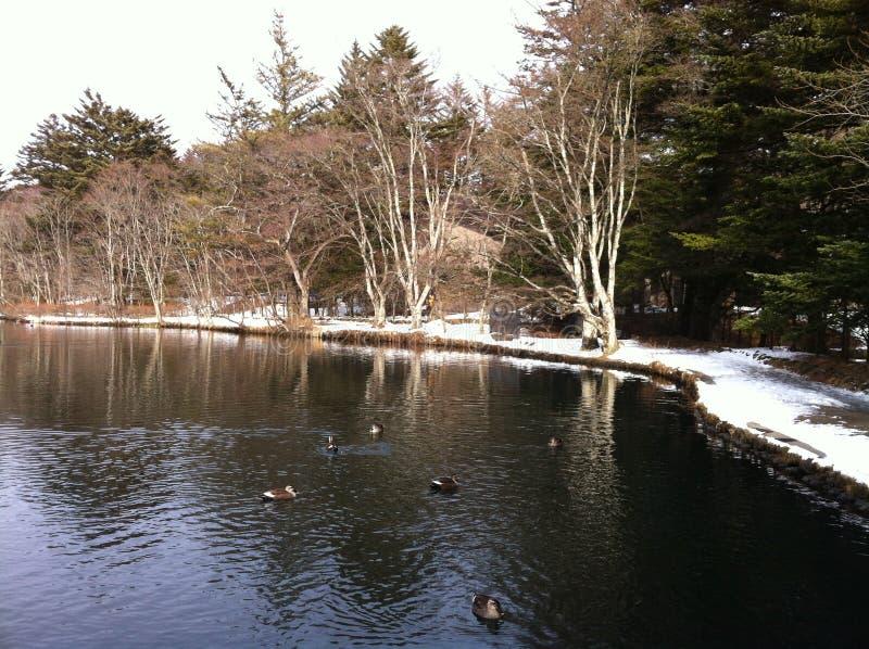 Opinión del lago con los patos en la charca de Kumoba en invierno imágenes de archivo libres de regalías