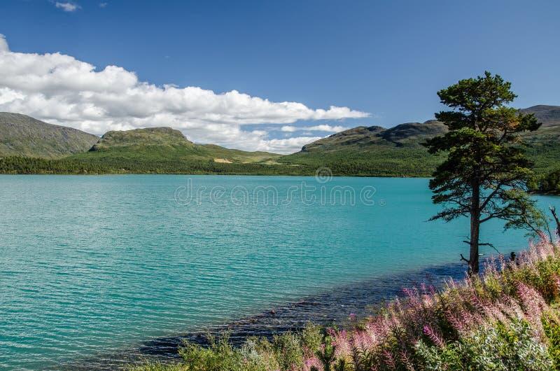 Opinión del lago que sorprende en el parque nacional de Jotunheimen con el árbol antedicho y verde del cielo azul a la derecha imagenes de archivo