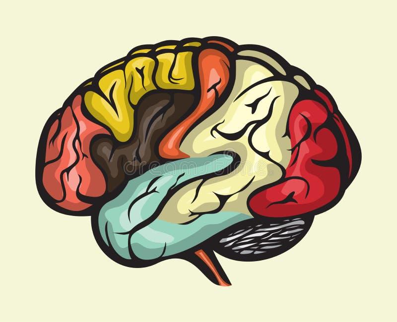 Opinión del lateral del cerebro humano ilustración del vector