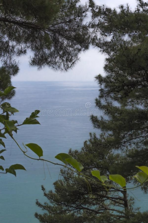 Opinión del mar del bosque imágenes de archivo libres de regalías