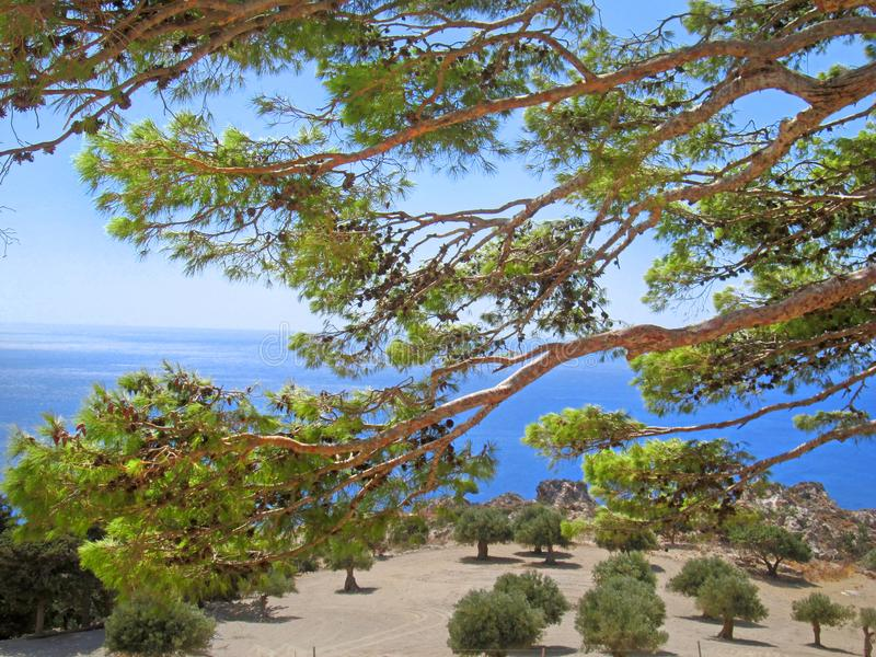 Opinión del mar a través de los pinos imágenes de archivo libres de regalías