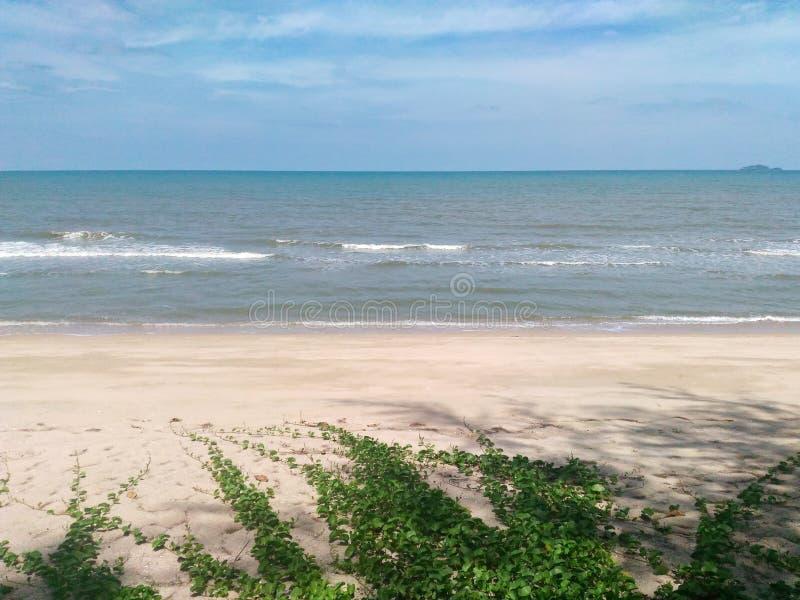 Opinión del mar y correhuela de la playa fotos de archivo libres de regalías