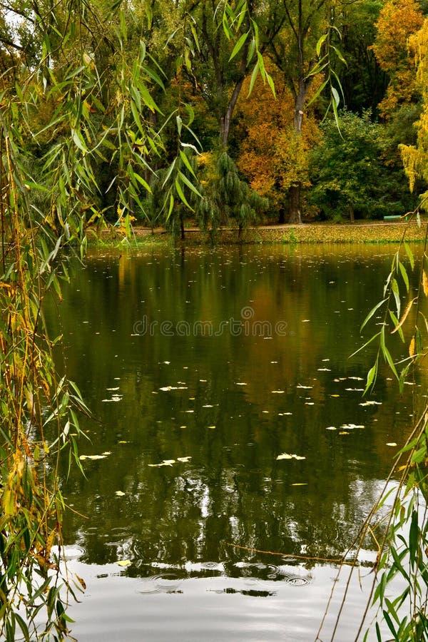 Opinión del otoño sobre el lago fotos de archivo libres de regalías