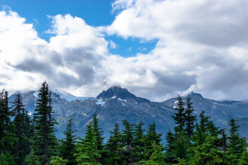 Opinión del paisaje de árboles alpinos y de montañas nevadas imagen de archivo libre de regalías
