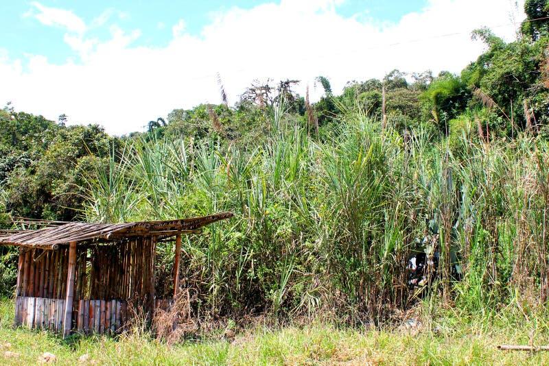 Opinión del paisaje de Mindo Ecuador con una cabina de la caña de azúcar fotografía de archivo