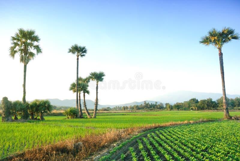 Opinión del paisaje del campo del arroz en Chiangmai Tailandia fotos de archivo libres de regalías
