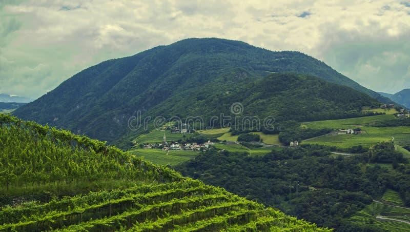 Opinión del paisaje del fondo de los campos de la uva y del pueblo alpino en la distancia entre las montañas imágenes de archivo libres de regalías