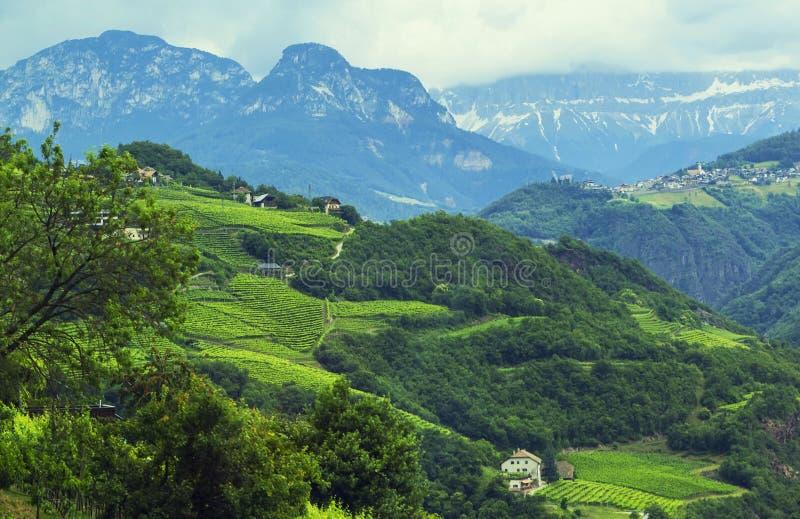 Opinión del paisaje del fondo de los campos de la uva y del pueblo alpino en la distancia entre las montañas fotografía de archivo libre de regalías