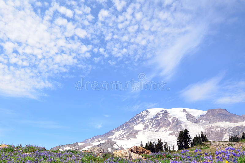 Opinión del paisaje del Mt Más lluvioso durante tiempo de primavera foto de archivo libre de regalías