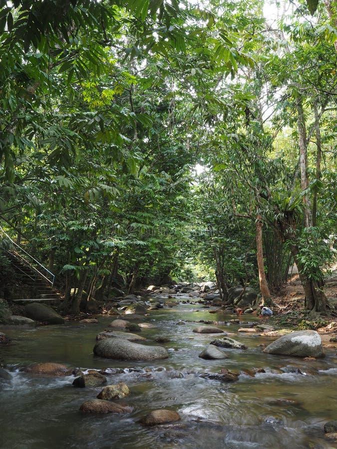 Opinión del paisaje del río en un bosque fotos de archivo