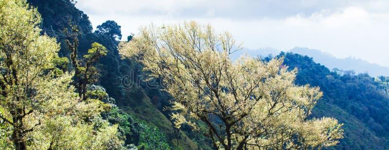 Opinión del panorama, arte de las ramas de árboles tropicales en la primavera, rayo de sol brillante que brilla en las hojas de fotos de archivo