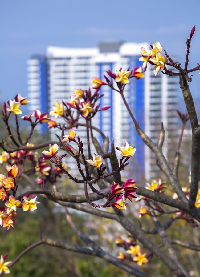 Opinión del panorama de la ciudad de Pattaya fotografía de archivo libre de regalías