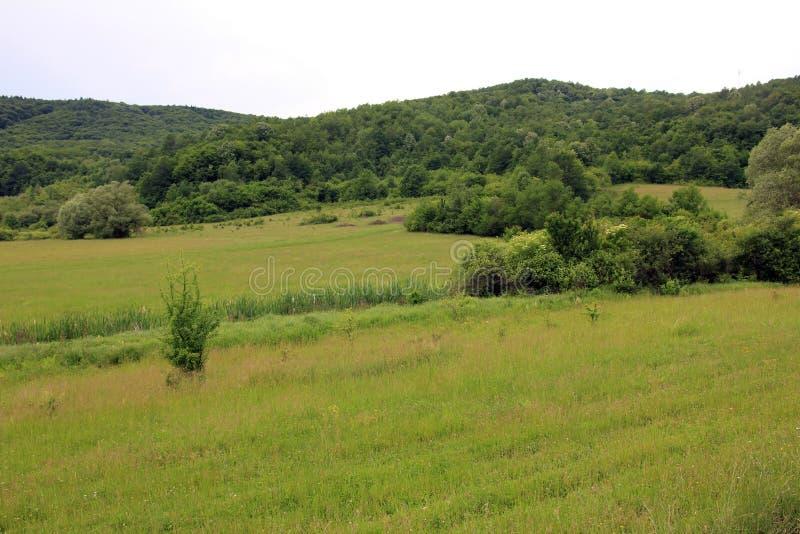 Opinión del panorama de la colina verde, ambiente preservado de la naturaleza foto de archivo libre de regalías
