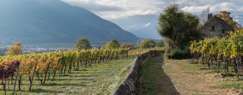 Opinión del panorama de los viñedos del color de la caída y pared y cabaña de oro de la roca foto de archivo