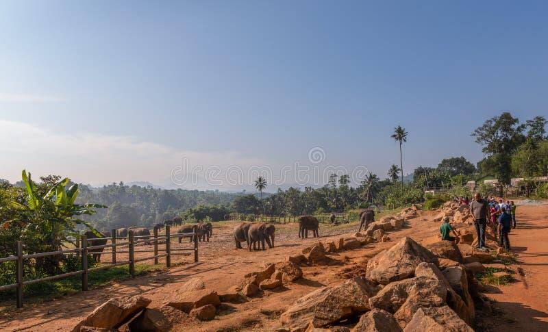 Opinión del panorama del orfelinato del elefante de Pinnawala en Pinnawala, Sri Lanka foto de archivo libre de regalías