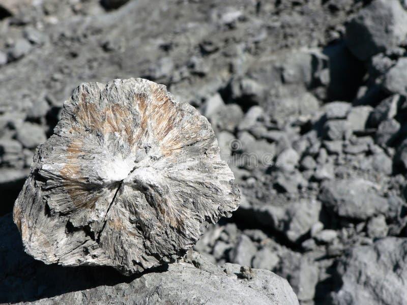 Opinión del primer del boro mineral en la piedra imagen de archivo libre de regalías