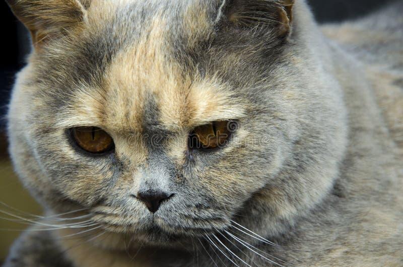 Opinión del primer de la cabeza del gato imagen de archivo