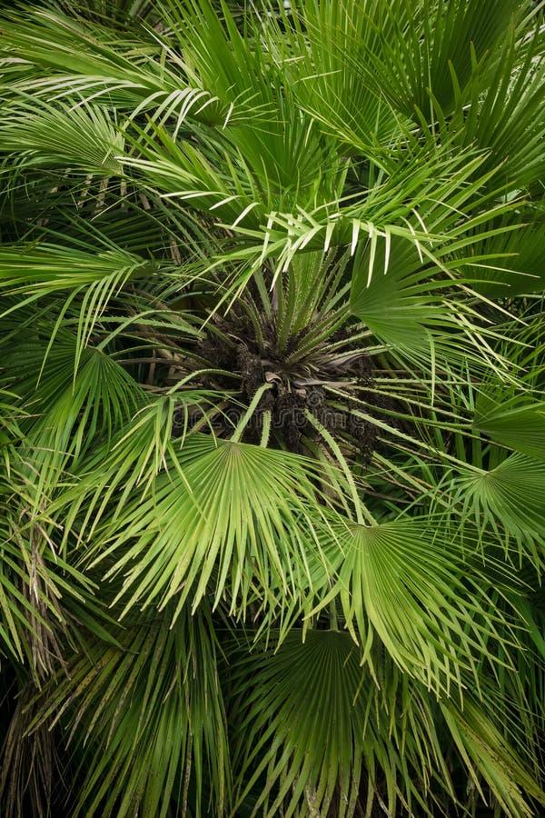 Opinión del primer de la hoja verde de la palmera imagen de archivo libre de regalías