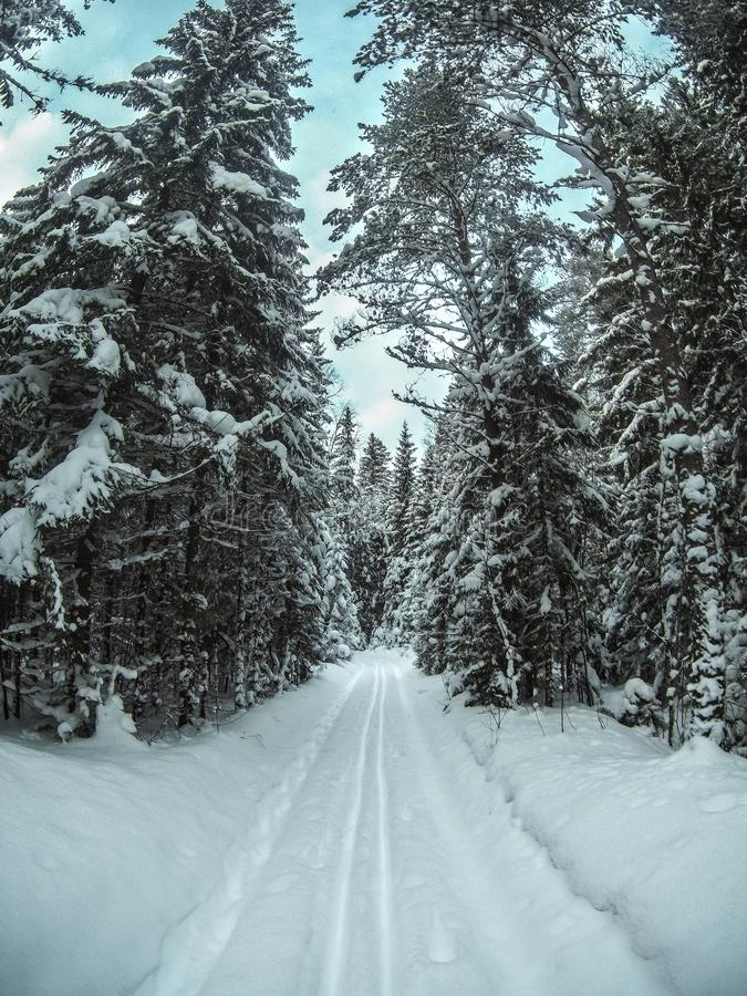 Opinión del primer de la pista vacía del esquí de fondo en bosque nevoso del invierno imagen de archivo libre de regalías