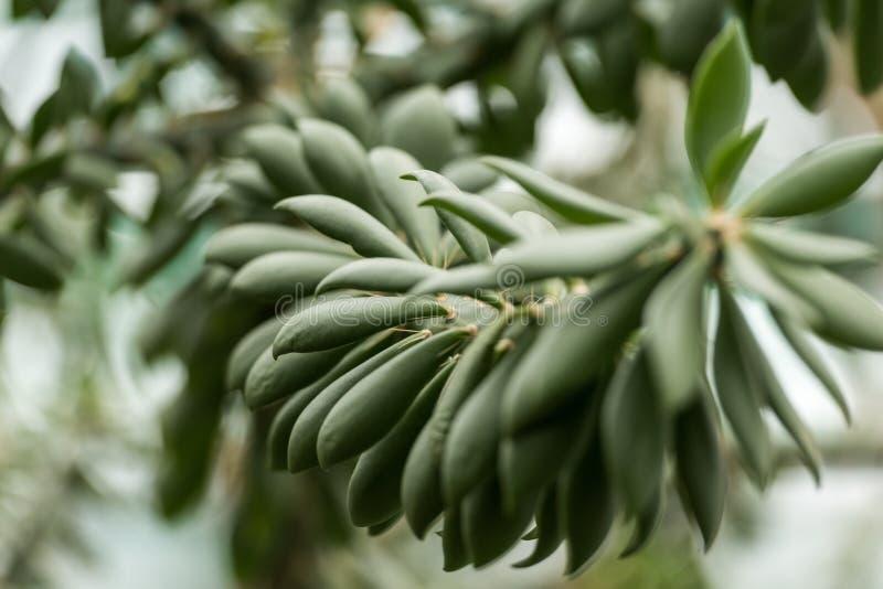 opinión del primer de la planta suculenta hermosa fotos de archivo